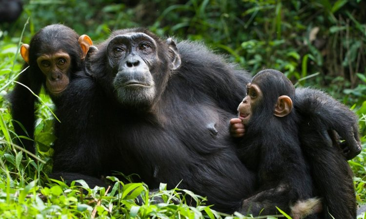 4 Days Murchison falls Chimpanzee Trekking Tour