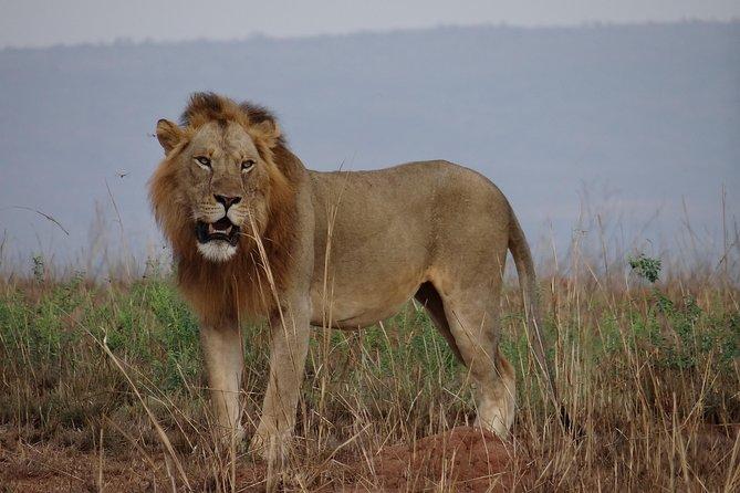 5 Days Murchison Falls Tour