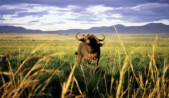 3 Days Kidepo Wildlife Safari