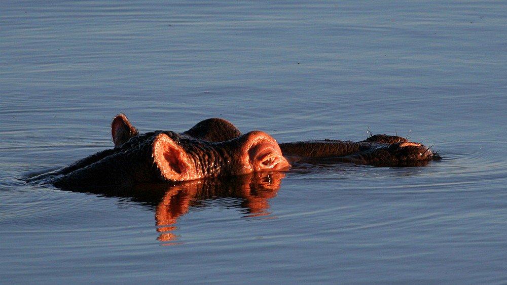 5 Days Uganda Gorilla Trekking & Wildlife tour