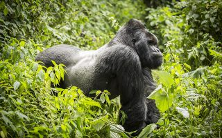 5 Days Virunga Safari Tour
