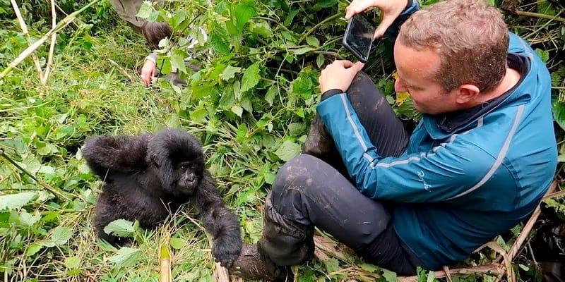A traveler enjoys Gorilla Trekking in Rwanda