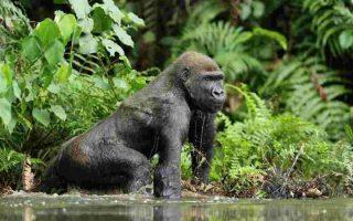 Eastern Gorilla Trekking