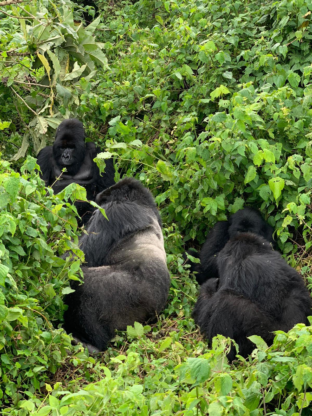 17 Days Combined Uganda, Rwanda and Congo