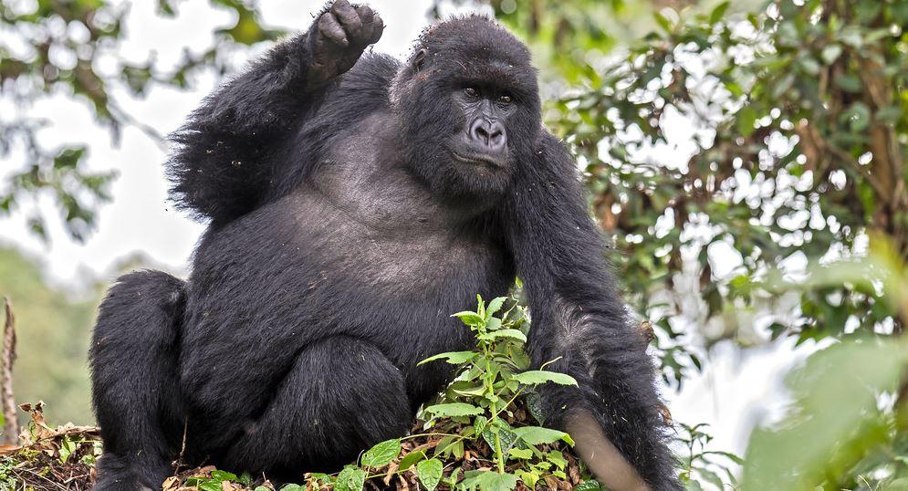 5 Days Rwanda gorilla trekking & Leisure safari