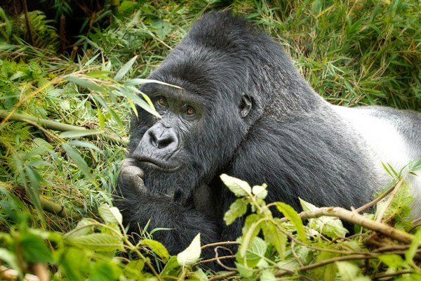 10 Days Congo Primates & Wildlife Adventure Safari