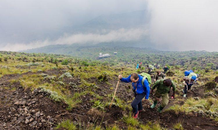 4 days Congo safari (Le Petit Bukima)