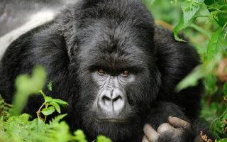 5 Days Mikeno Mist Safari