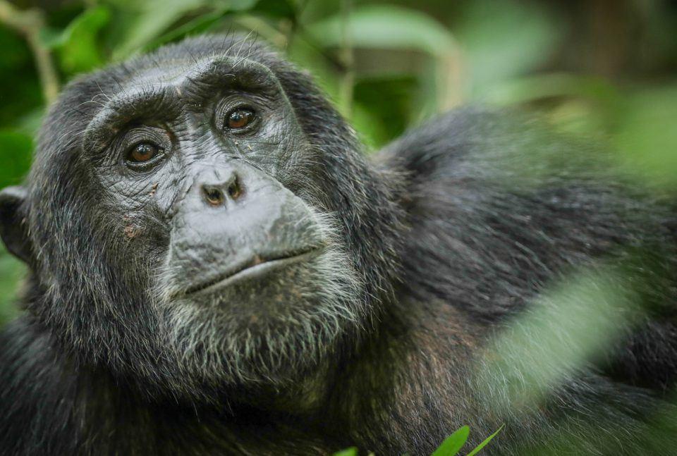 5 Days Uganda Primates Safari