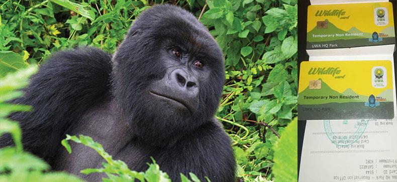 Uganda Gorilla Trekking Permits Discount