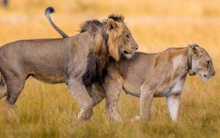 6 Days Rwanda Family Vacation Safari