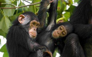 10 Days Rwanda Classic Safari (without gorillas)