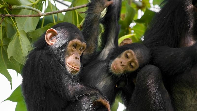 8 Days Kahuzi Biega & Virunga Safari from Kigali